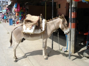 A parked donkey in San Antero's main street