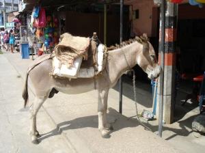 A parked donkey in San Antero's main street
